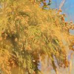 花粉症の症状を和らげるのに効果的な食べ物